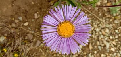 fleurs du parc national deosai photo