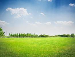 champ vert sous ciel bleu. fond de nature beauté photo