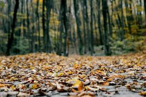 beau cliché de feuilles d'automne au sol photo