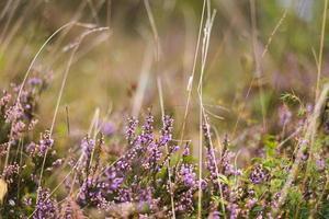fleurs dans le champ. photo