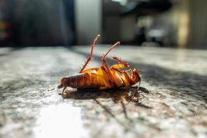 cafard mort sur le sol photo