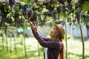 heureux jeunes femmes jardinier tenant des branches de raisin bleu mûr photo