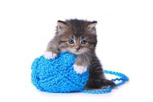 chaton avec pelote de laine en studio photo