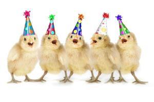 poussins jaunes chantant joyeux anniversaire photo