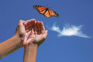 papillon monarque relâché photo