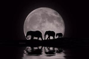 belle silhouette d'éléphants africains au lever de la lune photo