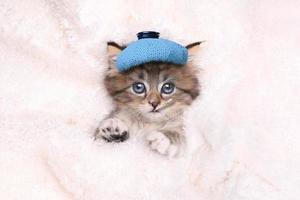 chaton malade avec sac de glace et thermomètre photo