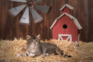 chaton mignon dans une grange avec de la paille photo