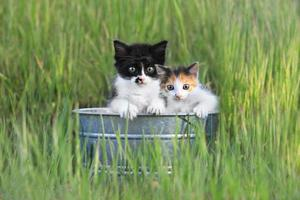 chatons à l'extérieur dans les hautes herbes vertes photo