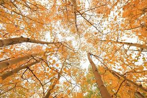 couleurs d'automne dans les montagnes de la sierra en californie photo