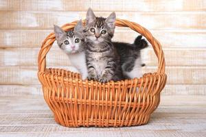 deux chatons adoptables dans un panier photo