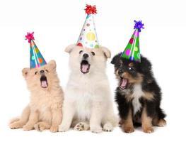 chiots chantant une chanson de joyeux anniversaire photo
