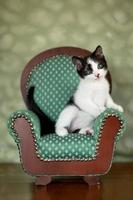 petit chaton assis sur une chaise photo