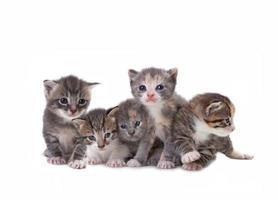 mignons chatons nouveau-nés facilement isolés sur blanc photo