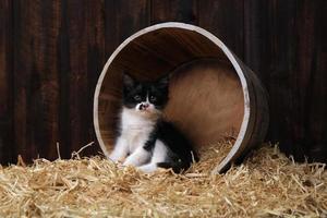 adorables chatons mignons dans une grange avec du foin photo