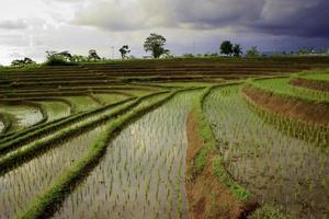 vue sur les rizières avec gradins sur la rizière en terrasse photo