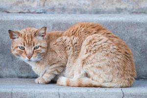 chat orange dans la rue photo