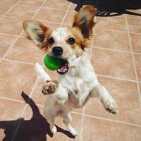 jouer avec un chien photo