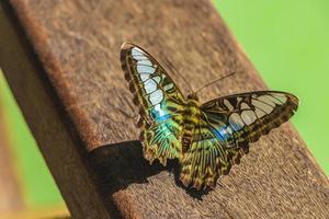 Beau papillon de couleur bleu turquoise et vert cascade kuang si laos photo