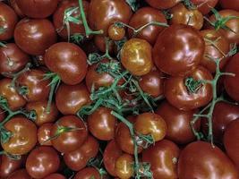 tomate à l'extérieur dans le jardin photo