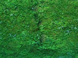 texture pierre sarcelle photo