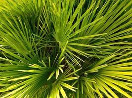 plante d'extérieur dans le jardin photo