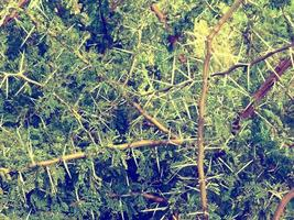 plantes dans le jardin photo