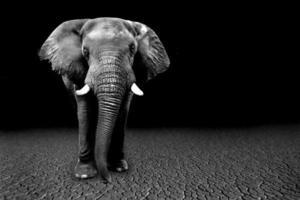 images sauvages d'éléphants d'afrique en afrique photo