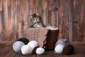adorable chaton avec des pelotes de laine photo