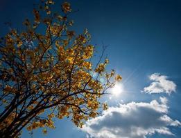 arbre silhouette pendant le matin dans le ciel lumineux photo