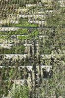 façade écologique avec des plantes photo