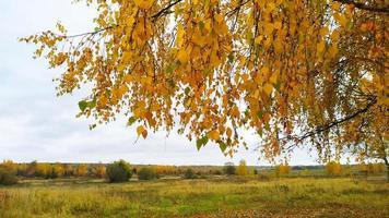 paysage d'automne. automne lumineux. une branche au feuillage jaune penchée à l'horizon. photo