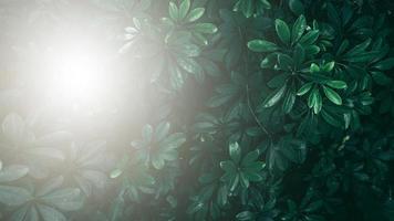 jardin vertical avec feuille verte tropicale, ton sombre avec lumière du soleil. photo