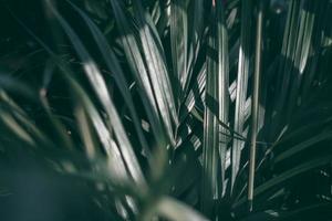 fond de feuille verte tropicale floue, thème de ton sombre. photo