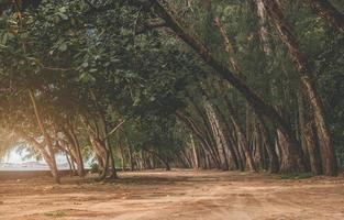 vue paysage de pins et rue du rez-de-chaussée. photo