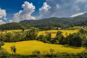 champ de rizières en terrasses d'or jaune en vue montagne. photo