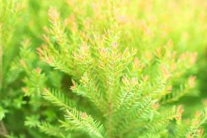fond de feuille verte. motif de feuilles abstraites pour l'arrière-plan du modèle de nature. photo