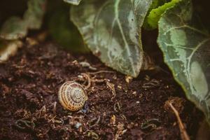 coquille d'escargot vide sur le sol dans le jardin photo