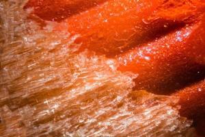 pointe de crayon orange sous le microscope photo