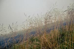 rosée du matin dans le champ sec d'herbe avec goutte de rosée. photo