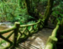 pont en bois dans la jungle, thaïlande, arrière-plan flou photo