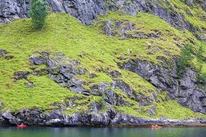 chèvres de montagne et excursions en canoë dans le magnifique paysage de fjord norvégien. photo