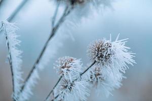 nature de prairie d'herbe couverte de gouttelettes glacées de rosée du matin. temps d'hiver brumeux, paysage blanc flou. journée d'hiver froide et calme, plantes naturelles gelées en gros plan photo