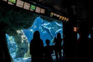 Gênes, Italie, 2 juin 2015 - personnes non identifiées à l'aquarium de Gênes. l'aquarium de génois est le plus grand aquarium d'italie et parmi les plus grands d'europe. photo