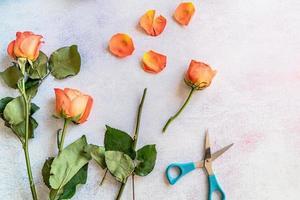 bouquet de roses oranges prêtes à être coupées photo