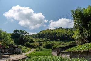 une route menant à une distance dans le pays, avec des maisons et des forêts vertes ou des champs photo