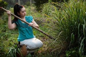 mode de vie d'une femme d'Asie rurale déterrant de la citronnelle dans un jardin, cultivant elle-même des légumes biologiques, concept de femmes asiatiques dans le domaine de la campagne en thaïlande photo