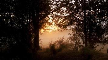 coucher de soleil ou lever de soleil encadré d'arbres sauvages dans le pays, concept de paradis ou de paix photo