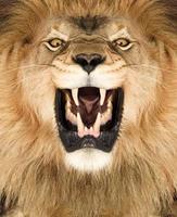 roi Lion photo