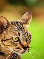 mon chat va en proie photo